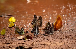 The Mud Race Transformation butterflies in the dirt